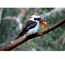 The Kookaburra Thief Photographic Print