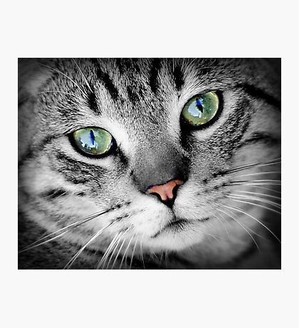 Cute cat portrait Photographic Print