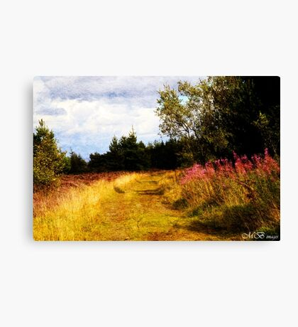 Willow Herb Canvas Print
