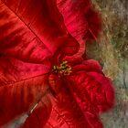 Christmas Flower by designingjudy