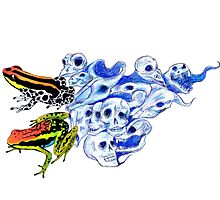Poison Frogs Photographic Print