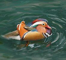 duck mandarin by alexandr-az
