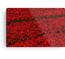 Poppy fields of remembrance for WW1 at Tower of London Metal Print