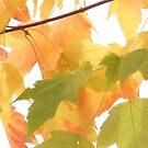 Pacific Northwest Autumn beauty by Rainydayphotos