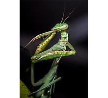 Praying Mantis  Photographic Print