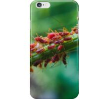 Aphid Colony iPhone Case/Skin