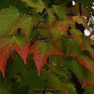 The trek toward fall by Rainydayphotos