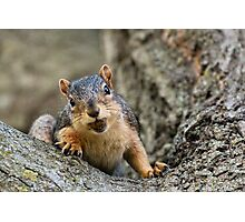 I can fit two acorns in my mouth! :) Photographic Print
