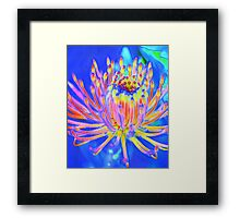 """Decorative Floral """"Pincushion"""" - Abstract Framed Print"""