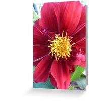 red flower blossom Greeting Card