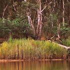 Reeds at Cobram By Lorraine McCarthy by Lozzar Landscape