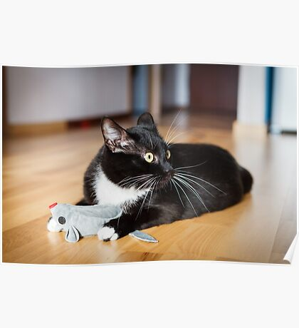 Cat playing with mouse-toy Poster