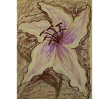 Stargazer Lily in Pastel Photographic Print