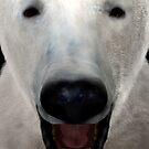 Polar Bear by Vac1
