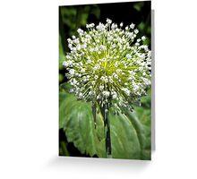 Sphere Bouquet ( White Allium ) Greeting Card