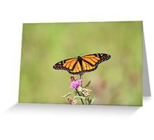 Male Monarch Butterfly Greeting Card