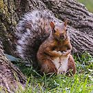 Hurry Up and Take the Photo... I Have Nuts to Gather! by Heather Friedman
