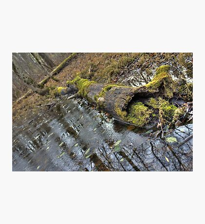 Old Mossy Log  Photographic Print