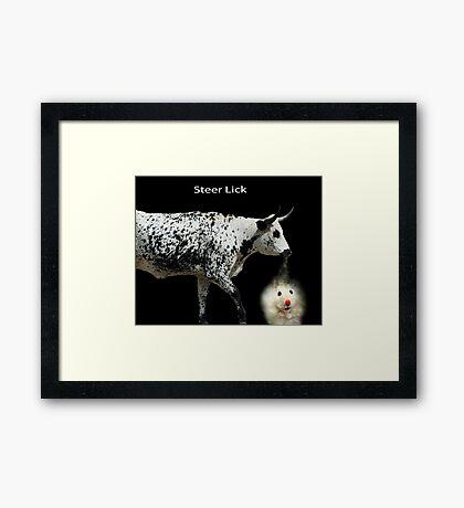 Steer Lick Framed Print