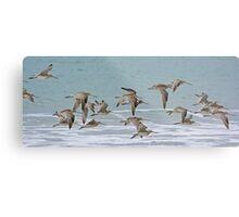 Bar-tailed Godwit Metal Print