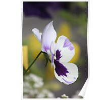 Pansy Poster