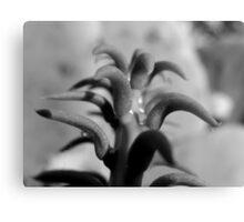 TOP VIEW OF A PRICKLY CACTUS Canvas Print