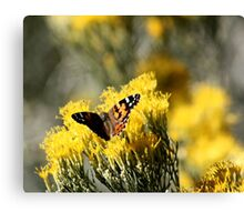 Butterfly Kisses 2 Canvas Print