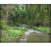 Willow Green on the Merri Photographic Print