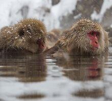 Onsen monkeys, Nagano by Tammy Tan