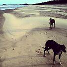 Casuarina Beach 1304 by Michael Kienhuis