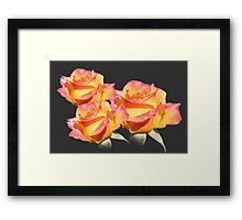 Lovely orange, pink, yellow rose flowers. Love, friendship, roamnce. Floral photo art. Framed Print