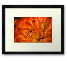 A new begining Red Dahlia Framed Print