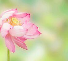 Blowin in the wind - lotus flower by Jenny Dean