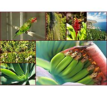 Collage from Portugal (Madeira) 4 - Travel Photography Photographic Print