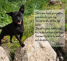 Black Chihuahua dog. by LisaRent