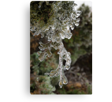Mother Nature's Christmas Decorations - Cypress Branches Canvas Print