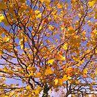 Autumn Colors by Desaster