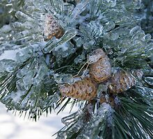Mother Nature's Christmas Decorations - Pine Cones by Georgia Mizuleva