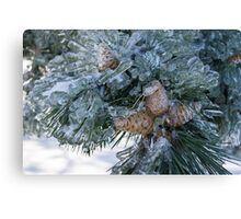 Mother Nature's Christmas Decorations - Pine Cones Canvas Print