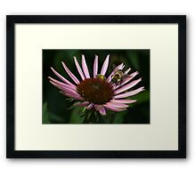 It's Getting Crowded on This Flower Framed Print