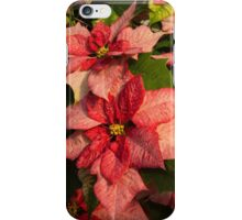 Exotic Speckled Poinsettia Blossoms - Christmas from the Tropics  iPhone Case/Skin