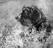 Pensive pooch by Nic MacBean