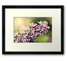 Flowers background. Pink lilac flowers Framed Print