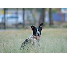 Grassy pooch Photographic Print