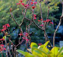 Paradise Garden - Kuala Lumpur, Malaysia. by Tiffany Lenoir
