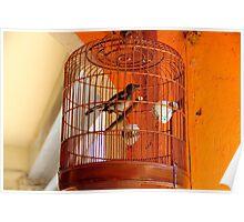 A Bird in cage - Kuala Lumpur, Malaysia. Poster