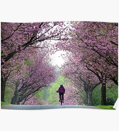 Spring Brings Cherry Blossoms! Poster