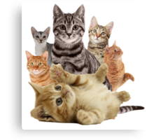 Cat Pile Canvas Print