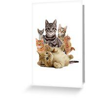 Cat Pile Greeting Card
