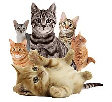 Cat Pile Photographic Print